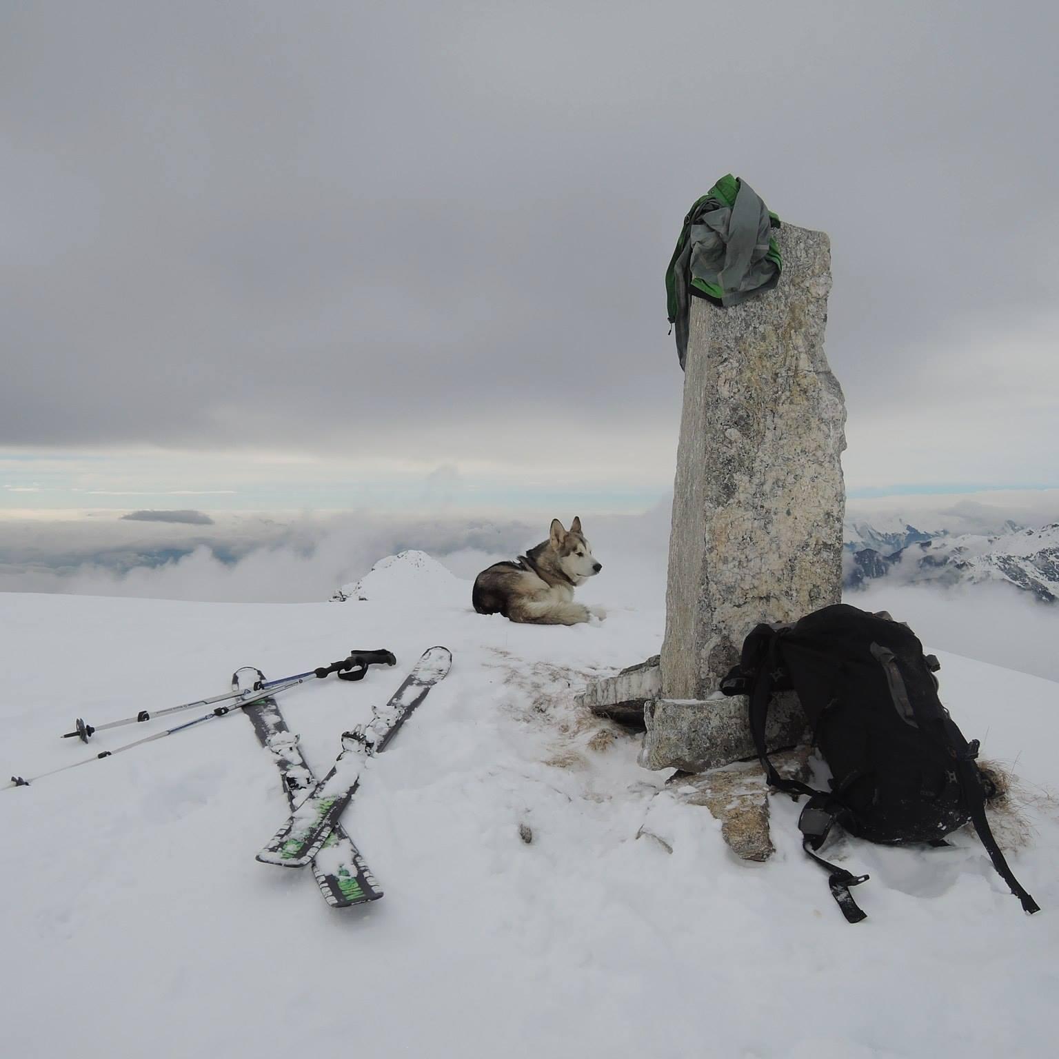 L'incredibile avventura di Andreas e dei suoi cani: dalla Danimarca all'Italia correndo